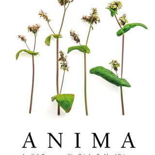 Animalescols cover montagudeditores